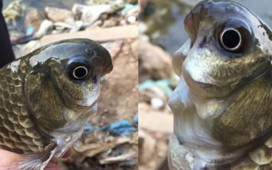 1男子钓上鱼后瞬间吓得又扔回了河里!