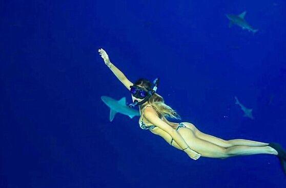 女大学生比基尼性感妩媚 与鲨共舞走红网络(图)