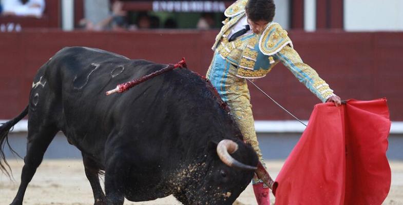 西班牙马德里斗牛表演场面惊险刺激 斗牛士帅气潇洒