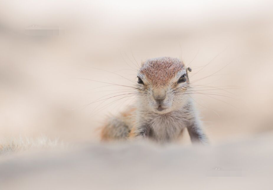 可爱逗趣犯困松鼠清梦被扰 舞爪拍苍蝇画面逗趣
