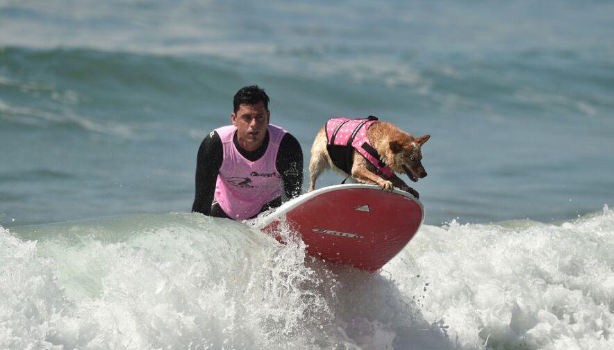 狗狗和主人一起海上享受冲浪乐趣